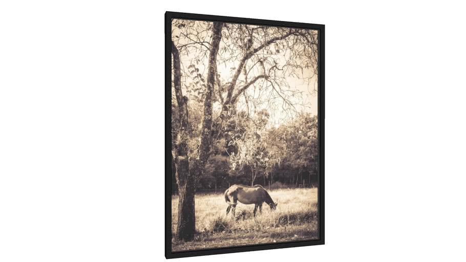Quadro cavalo sob árvore - Galeria9, por edmoraes