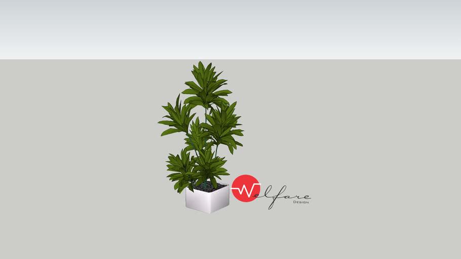 archmodel plantas