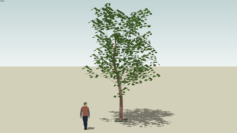 Model tree sketchup amended by Alacant 3D