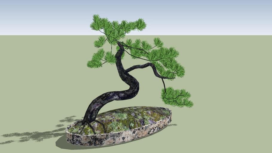 Bonsai Pino 3D Pine tree Bonsai, High Polygon