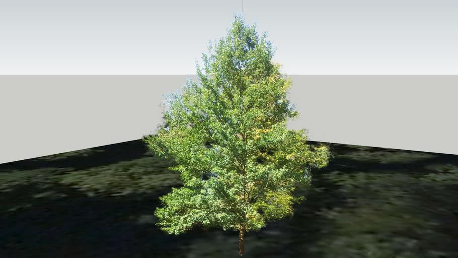 Zamok Veselí nad Moravou - Strom 202