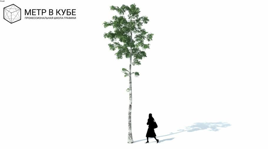 Low poly 3d tree birch (032)