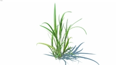 Plantas - Forração/Arbustos