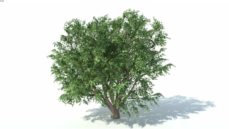 Low poly 3d tree (023)