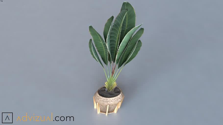 planta free