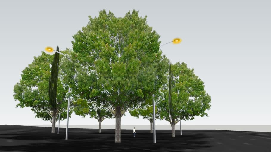 Trees in Washington, DC