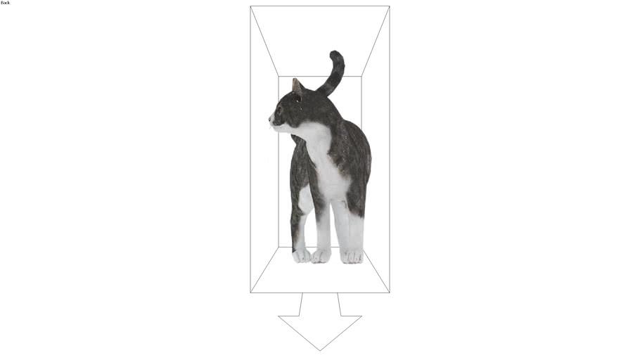 ROCKIT3D | Animal 0014 cat