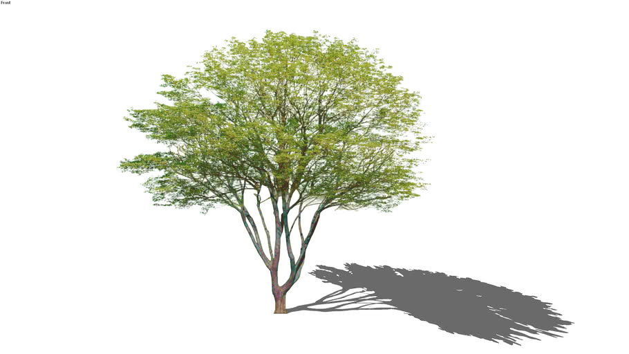 arbre1003F