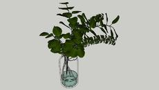 Indoor Plants | Vase
