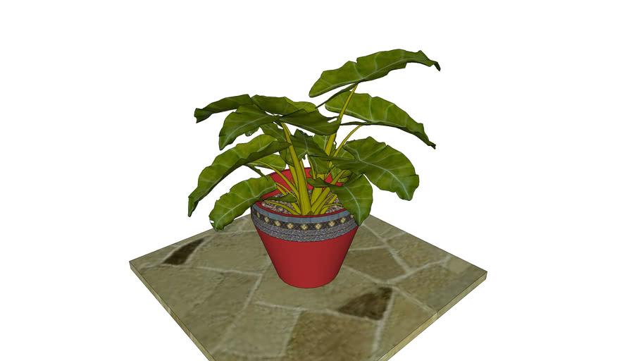 Planta de Ornato.con Maceta