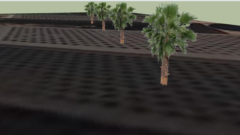 palm trees near WTC