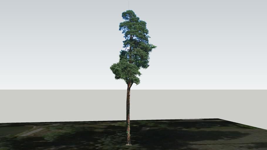 Zamok Veselí nad Moravou - Strom 76