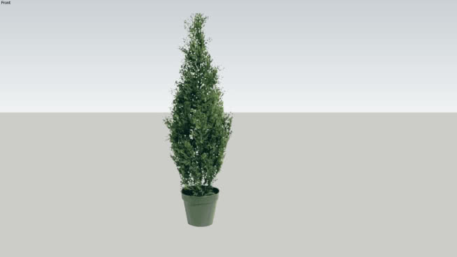 Lo Poly, Potted Arborvitae