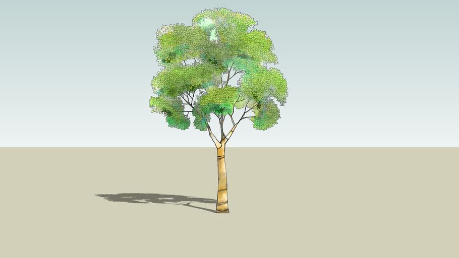 Tree 2D Color2