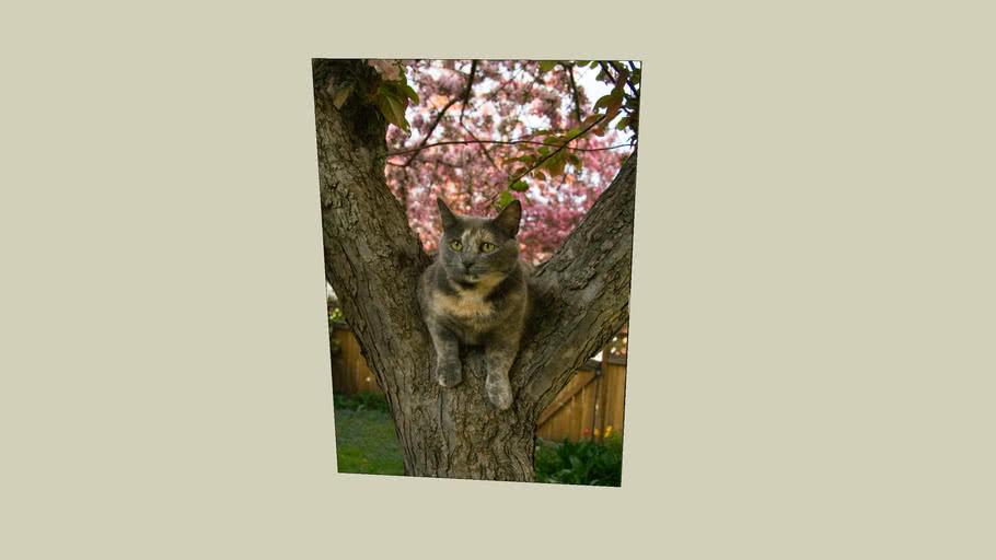 Phoenix in a tree