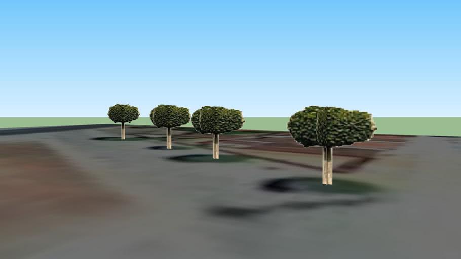 Arvores Caraúbas