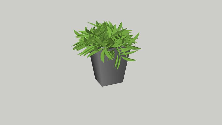 PLANT J