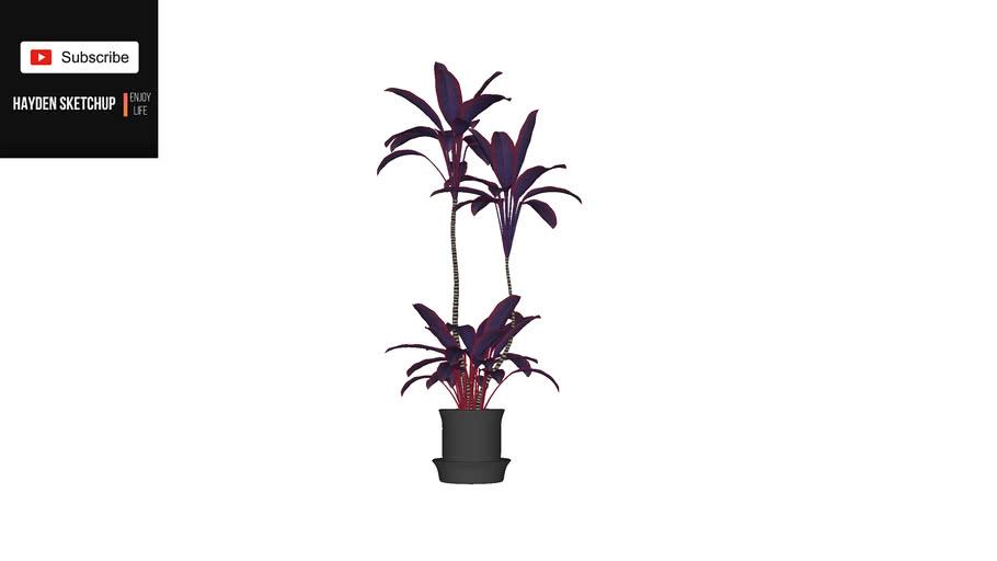 Haydensketchup - Plant 52