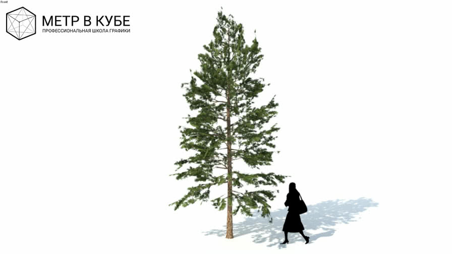 Low poly 3d conifer tree (052)