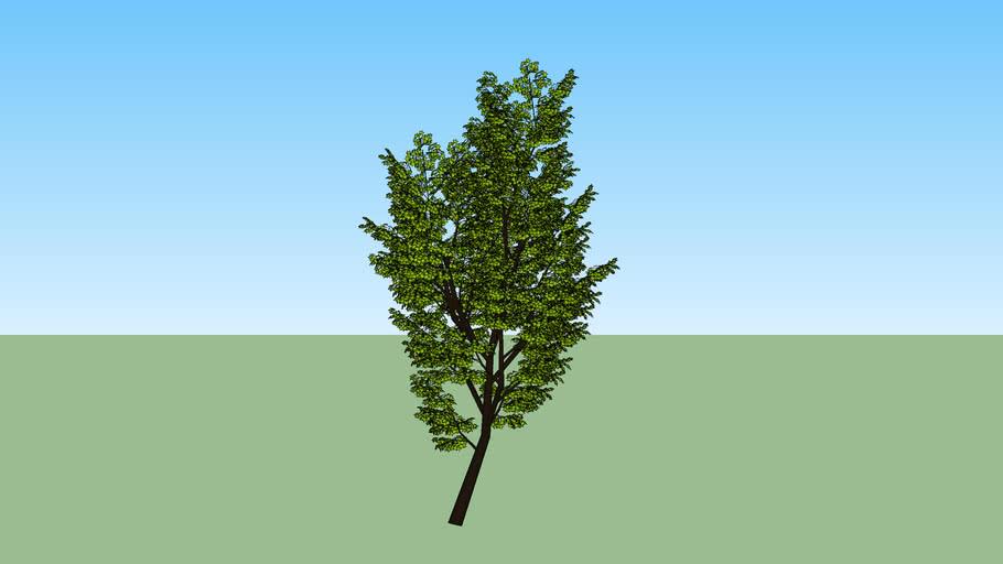 Árvore 12