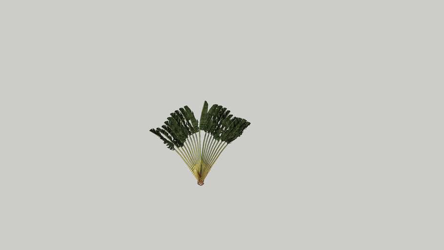 Palm tree-04_HHD