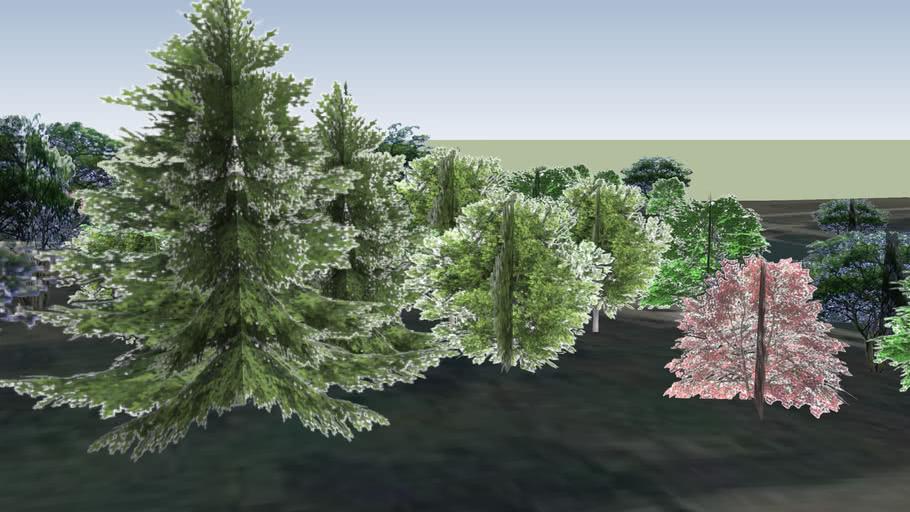 浙师大初阳湖周边树木 TREES AROUND THE CHUYANG LAKE IN ZHEJAING NORMAL UNIVERSITY