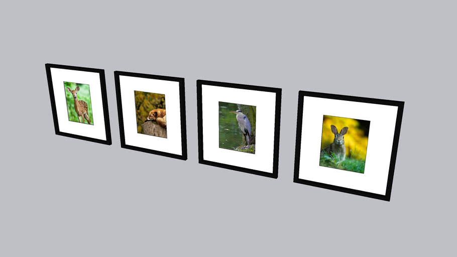 Framed Wildlife Photos