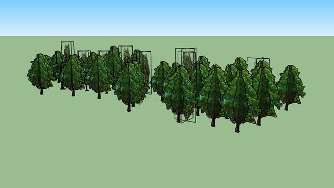 Drzewa Kortowo 98