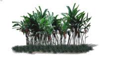 Tree / Plant