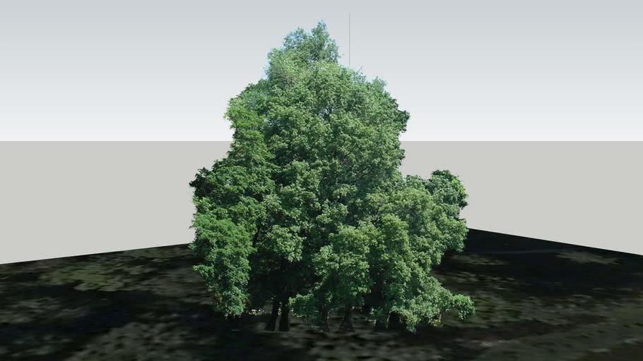 Zamok Veselí nad Moravou - Strom 61