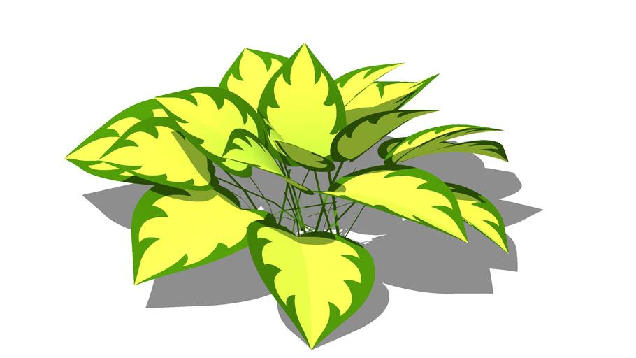 Hosta yellow-green