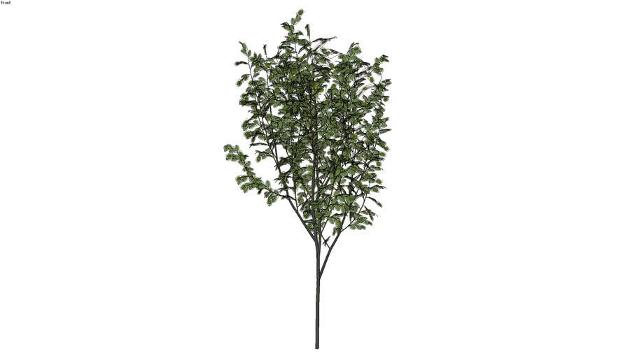 vegetacao externa01