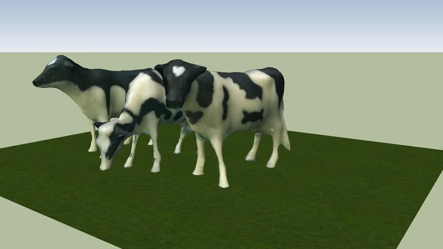 乳牛   Cows