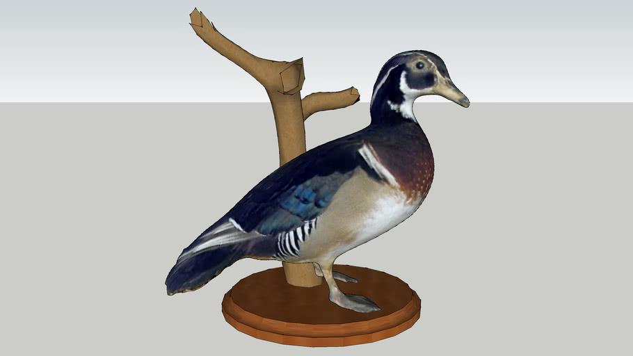 wood duck mount