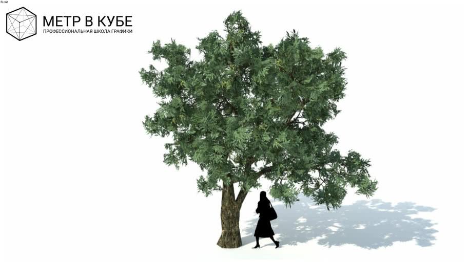 Low poly 3d tree (057)