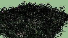 fondo flora ibera