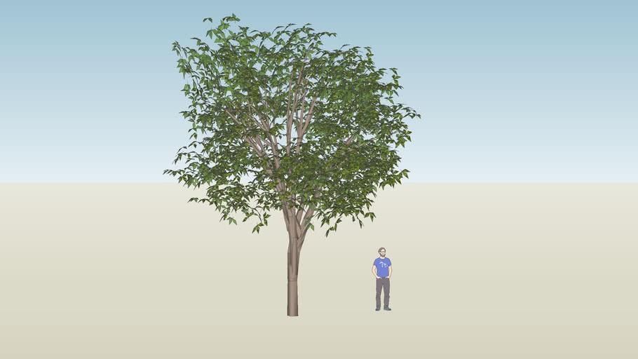 GREAT 3D MODEL NUT TREE