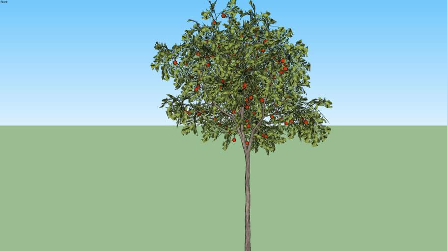 Árvore 17