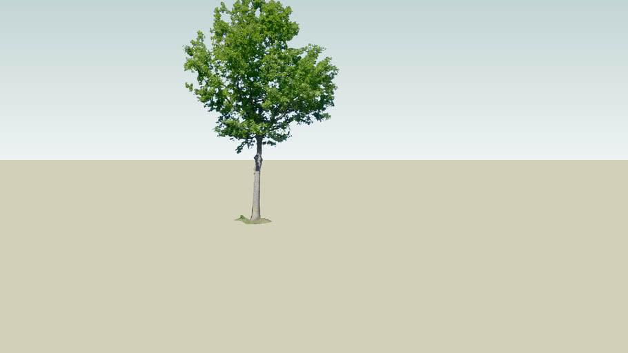 my garden tree
