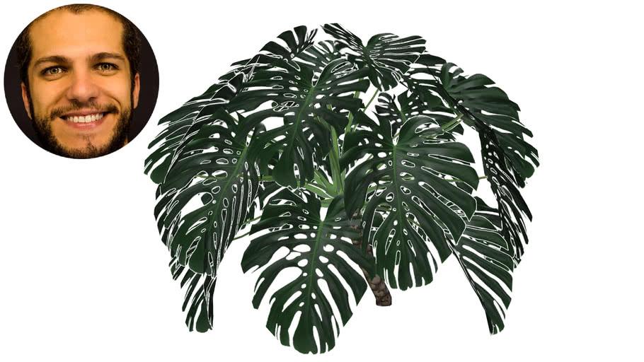 Plantas Destaque
