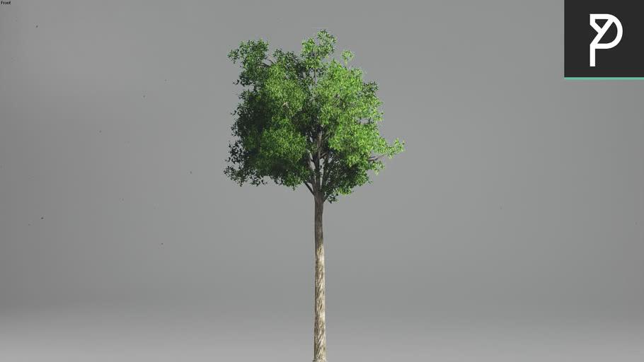 2DTrees_018   Leaf Medium