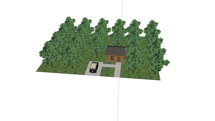 Forest Hut