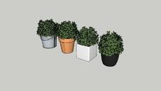 Decor | Plant
