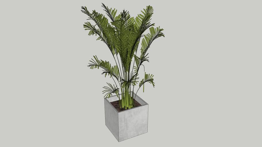 Vegetation 12