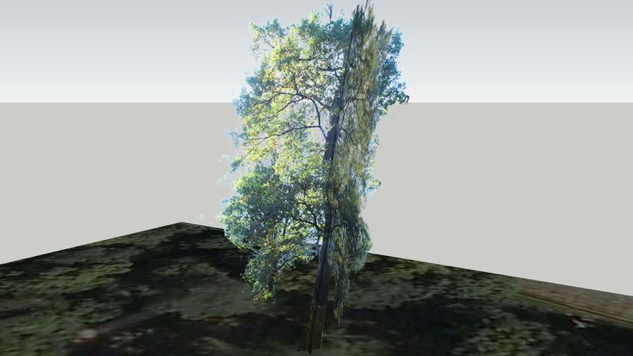 Zamok Veselí nad Moravou - Strom 156