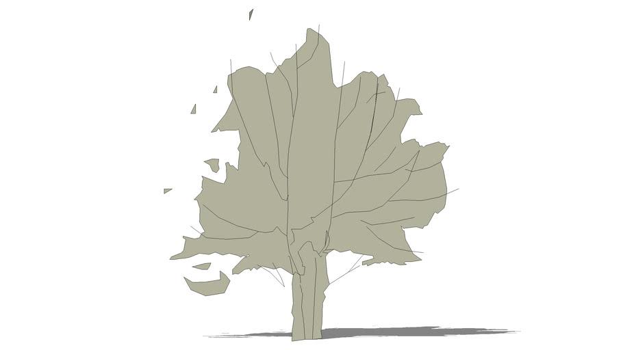 2D sketch tree5