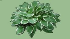 plants 2D