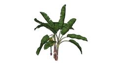 Plantas - Frutíferas