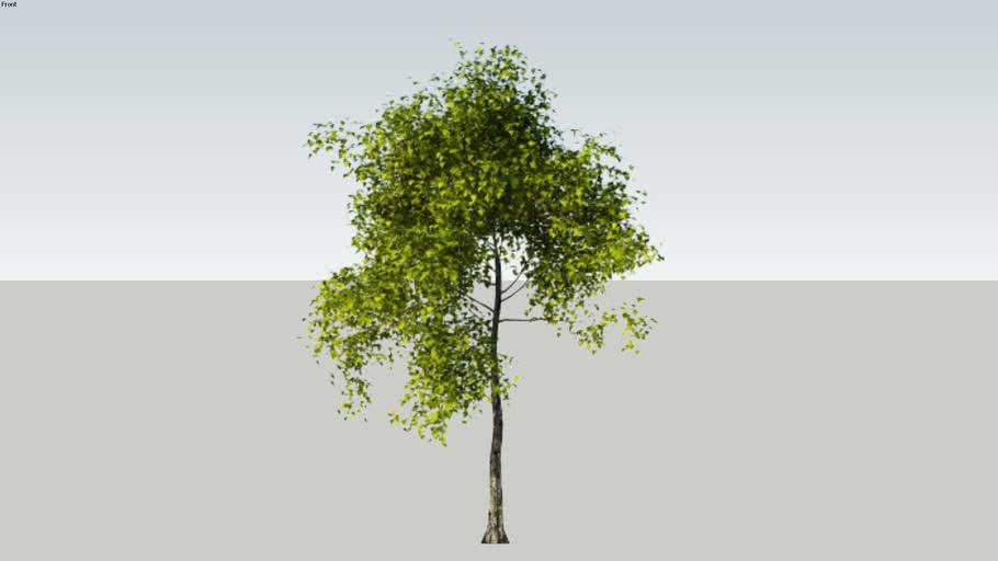 V-Ray proxy_iTrees-01-GenericTree_00_\