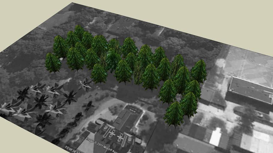 Drzewa Olsztyn 109